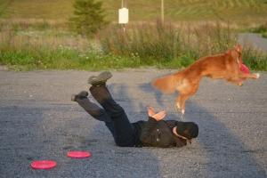 Tällaista koirafrisbee voi olla. Kuva avajaisten lajinäytöksestä.